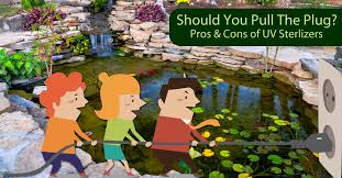 is a uv pond filter the best choice for my pond
