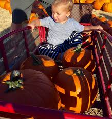 Pumpkin Patch Jefferson Blvd Culver City by Living The Dream Home October 2015