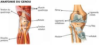 douleur de genou tout sur le genou en français
