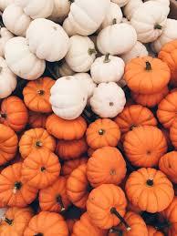 Hurricane Utah Pumpkin Patch by Autumn Halloween And Pumpkin Image Cell Phone Wallpaper