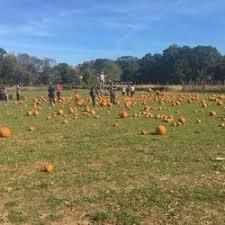 Pumpkin Picking Richmond by Decker Farm 13 Photos U0026 13 Reviews Farmers Market 435