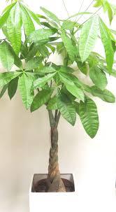 plantes vertes d interieur plantes vertes d extérieur photos de magnolisafleur