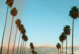California Tumblr Photography Palm Trees Wallpaper WSW2025191 12 Tree