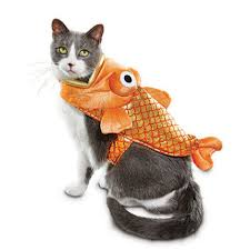 costume for cat 22 best cat costumes for 2017 hilarious costumes for cats