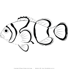 Oscar Fish Color Fading Clown Coloring Page Colouring Book Freshwater Full Size