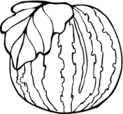Watermelons Coloring Pages