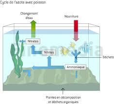 ph aquarium eau douce eau aquarium choisir eau ph durée ooreka