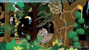 Earth Floor Biomes Desert by Biomes Desert Tropical Rainforest Savanna Coral Reefs U0026 More
