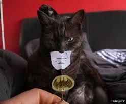 cat batman costume batman cat costume 1funny