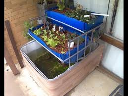 Aquaponics for Dummies The Easiest DIY Indoor Aquaponic System on