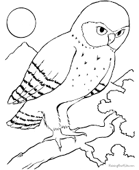 Free Printable Bird Coloring Picture Of Owl
