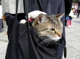 cat wont eat 2 depressed 7 reasons your cat won t eat lifestyle