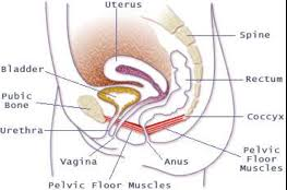 Pelvic Floor Muscle Spasm by Pelvic Floor Physiotherapy
