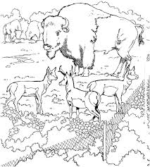 Printable Buffalo Coloring Pages