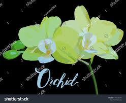 100 Blooming House Branch Yellow Orchid Yellow Orchid Stock Vector