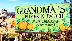 Pumpkin Patch Santa Rosa by Top Pumpkin Patches U0026 Corn Mazes In Sonoma County Disney Gals