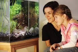 synchronschwimmer für das wohnzimmer schwarmfische beleben