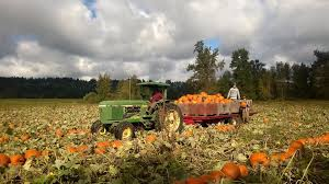 Old Auburn Pumpkin Patch by 7 Best Pumpkin Patches And Corn Mazes In South Puget Sound Parentmap