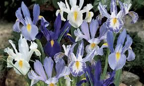37 on iris bulbs 30 pack groupon goods