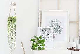 die schönsten pflanzen deko ideen