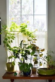 Best Plant For Windowless Bathroom by Bathroom Plans For Bathroom Shelvesplants No Sunlight Plants
