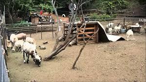 Waimanalo Pumpkin Patch And Corn Maze by Waimanalo Animal Farm Youtube