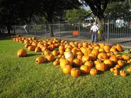 Pumpkin Patch Houston Oil Ranch by You Might Try These Places To Find The Perfect Pumpkin Houston