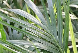 plantes vertes d interieur comment s occuper des plantes d intérieur en hiver