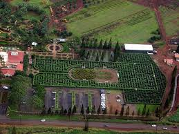 World s st Plant Maze – Wahiawa Hawaii Atlas Obscura