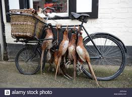 Dead Pheasant Game Birds On Old Bike Outside Butchers Shop In ... Bills Old Bike Barn Museum September 24 2016 Free Spirit Album On Imgur March 2017 Blog 10 X 12 White Rectangle Number Plate Sold 1929 Monet Goyon 250cc Type At French Classic Vintage Gophers And Cheese Donnie Smith Show 2013 Part 5 Kawasaki 8083 Kz550 Repair Manual Midwest Moto Swap