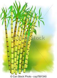Plant Of Sugar Cane Vector Illustration