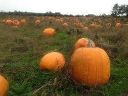 Leeds Pumpkin Patch Columbus Ohio by 10 Great Pumpkin Patches In Ohio This Fall