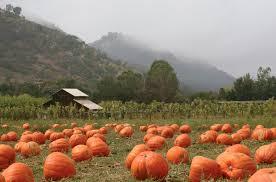 Pumpkin Patch Littleton Co 2015 by Blog Circle J Real Estate