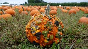 Pumpkin Picking Nj Colts Neck by Pumpkin U0026 Apple Picking At Eastmont Orchards 10 02 2016 Youtube