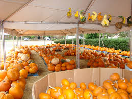 Pumpkin Patch San Jose 2015 by October 2013 Pumpkin Patches Fall Festivals And Halloween Fun In