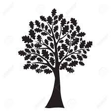 Black Oak Tree Royalty Free Cliparts Vectors And Stock