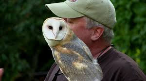 Meet The Barn Owl With Brian Bradley - YouTube Barn Owl Outdoor Alabama Owl Wikipedia Trust On Twitter Cservation Handbook A Wednesday Birdnation Wirral Home Facebook Audubon Field Guide Review Course By Martin Oconnor Arbtech Legal Status The Rspb Eastern Singapore Birds Project Barnowltrust Owls Owls Of The Niagara Region
