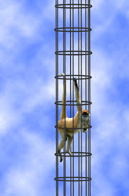A Monkey In An Infiniteyly Tall Cylindrical Cage