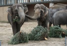 Chicago Christmas Tree Disposal by So What U0027s The Most Environmentally Friendly Way To Get Rid Of Your
