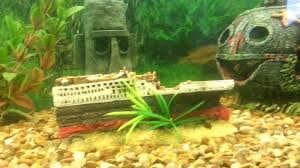 Spongebob Fish Tank Ornaments by Titanic Fish Tank Ornament Youtube