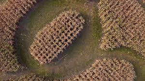 Bengtson Pumpkin Patch Homer Glen by The Corn Maze At Konow U0027s In Homer Glen Youtube