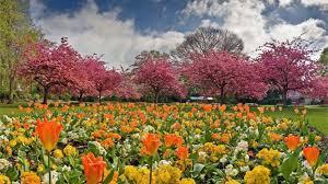 Flowers For Flower Beds by Flower Flower Beds Lovely Park Flowers Houses Lawn Clouds