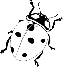 Charming Ladybug Coloring Pages Image 1