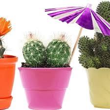 so pflegen sie ihren kaktus richtig derwesten de