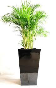 golden palm in pots free standing floor pots planters freestanding pots