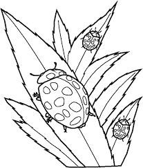 Bug Coloring Pages Ladybugs On Leaves