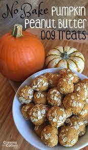 Pumpkin For Pets Diarrhea by The 25 Best Dog Pumpkin Ideas On Pinterest Healthy Dog Treats