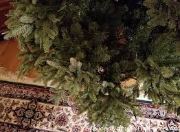 Balsam Hill Christmas Trees Complaints by So Disappointed With My Balsam Hill Fraser Fir