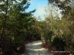 Black Hammock Wilderness Area Gallery – Florida s Natural Wonders