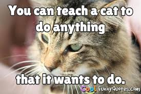 cat quotes you can teach a cat to do anything that it wants to do